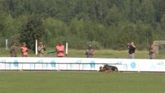 比赛现场出现严重失误 训练有素的军犬无法被唤回?