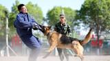 軍犬對假想敵撲咬訓練