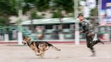 """听到训导员的指令后军犬迅速向目标发起""""攻击"""""""