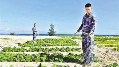 沙滩变良田 西沙水兵种出新鲜蔬菜