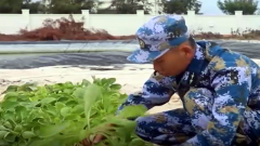 沙灘變良田 西沙水兵種出新鮮蔬菜