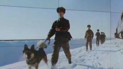 边境线上 官兵们和濒危野生动物和谐相处