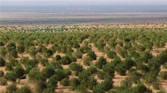 """20多年,阿拉善軍分區在""""生命禁區""""創造出綠色奇跡"""