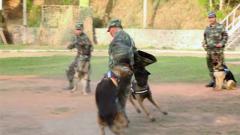 服役28年,这位驯导员被军犬扑咬了60多万次