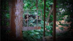 山林追击 一枪毙敌!武警云南总队机动第一支队组织狙击手考核