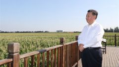 习近平:一定要采取有效措施保护好黑土地
