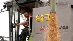 习近平总书记关切事丨食为政首——稳住农业基本盘增添发展底气