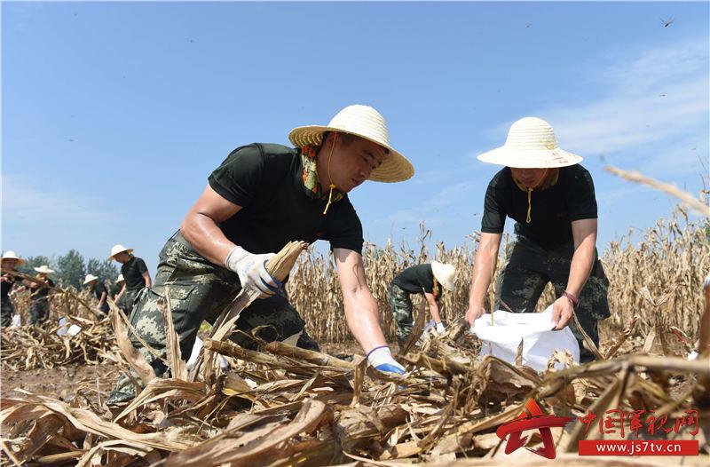 图10:2020年7月31日,安徽铜陵,武警合肥支队官兵在安徽铜陵市义安区老洲乡中心村东大堤抢收玉米。