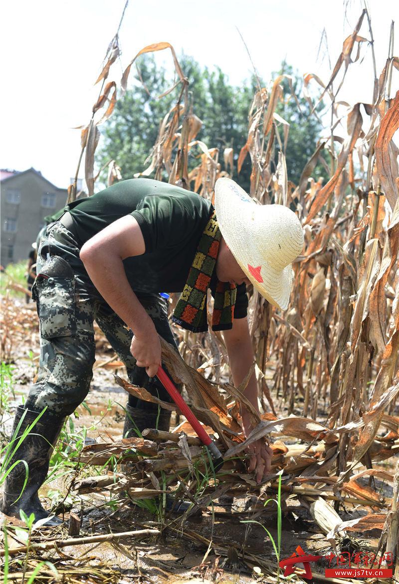 图18:2020年7月31日,安徽铜陵,武警合肥支队官兵在安徽铜陵市义安区老洲乡中心村东大堤收割玉米杆。