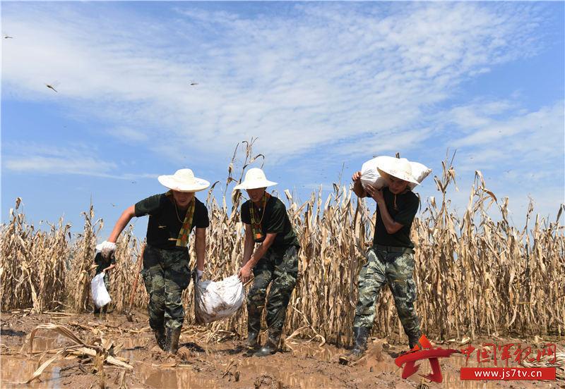 图15:2020年7月31日,安徽铜陵,武警合肥支队官兵在安徽铜陵市义安区老洲乡中心村东大堤搬运玉米。