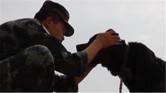 """【影像志·退伍季】 军犬""""凯瑞"""":训导员 我舍不得你走"""
