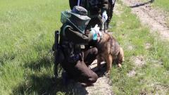 軍犬被咬到崩潰 這里是中國蚊蟲最多的地方