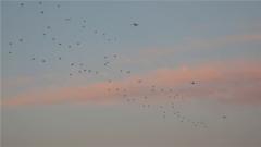 運-9機群編隊實施下半夜隱蔽突防遠程空降訓練