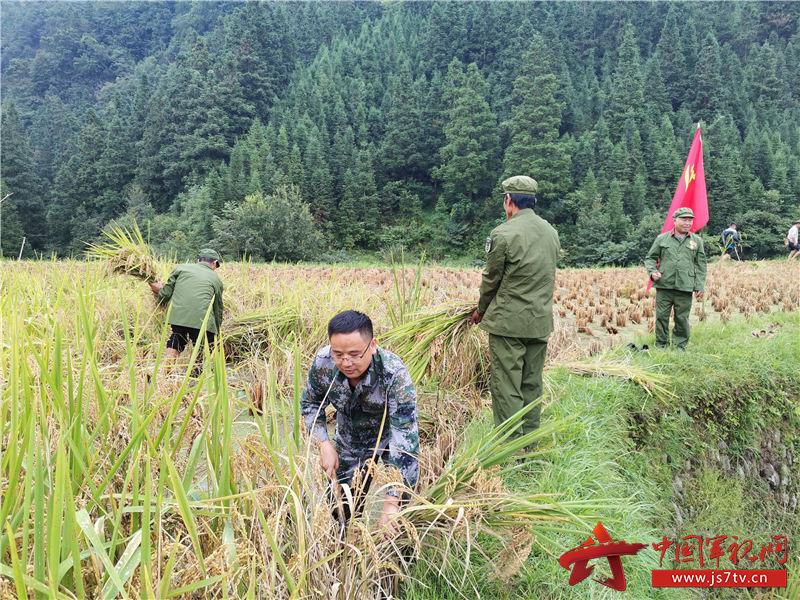 图为  斗里镇党委书记潘世华带领全镇干部职工及退伍军人在田间地头抢收稻谷现场