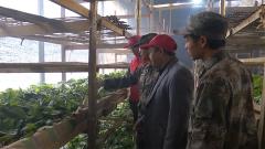 重慶黔江: 持續低溫影響桑蠶發育 民兵上門服務保生產