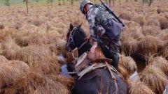 巡逻途中军马突然陷入沼泽,来看边防官兵如何自救