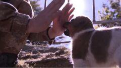 """一貓一狗來做伴 僅30多平米的""""天涯哨所""""里有不一樣的溫暖"""