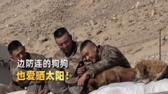 這里的陽光比黃金珍貴!邊防官兵帶著軍犬在屋頂曬太陽