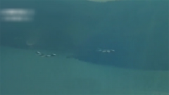 """萬米高空擊落美""""火蜂""""無人機 殲-6是怎么做到的?"""