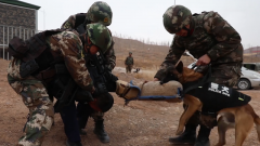 武警新疆總隊組織多課目人犬協同演練