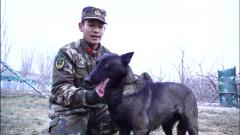 """【第一军视】你知道特殊的""""战斗员""""警犬是如何训练的吗?"""
