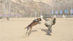 """人犬协同训练 这条军犬完美诠释""""如影随形""""!"""