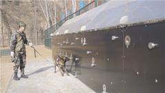 难度升级!看军犬如何在12米搜爆墙前找到目标