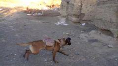 """军犬穿戴""""新装备"""" 信息化手段提升边防管控能力"""