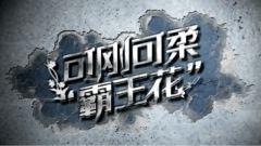 """《军事纪实》20210317《可刚可柔""""霸王花""""》"""