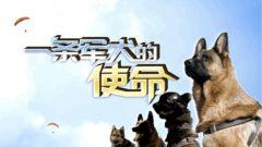 《军事纪实》20210326《一条军犬的使命》