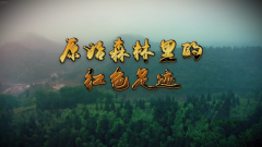 《軍迷行天下》20210505 原始森林里的紅色足跡
