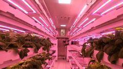 """""""生命禁区""""里也有一片绿色 """"植物工厂""""助力高原战士实现蔬菜自由"""