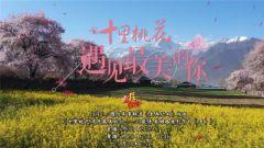 預告:《老兵你好》本期播出《十里桃花 遇見最美的你——川藏情 英雄路系列節目》