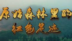 预告:《军迷行天下》本期播出《原始森林里的红色足迹》