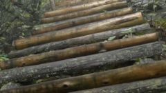 【原始森林里的红色足迹】 倒马坎 上下虎头山的唯一道路