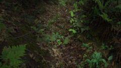 【原始森林里的红色足迹】一夫当关 万夫莫开的雷打山战壕