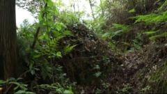 【原始森林里的红色足迹】 雷打山工事如何被攻破?
