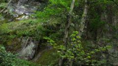 【原始森林里的红色足迹】 狭小的石寨 如何驻守数百士兵?