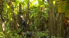 直击搜捕现场!南部战区陆军某边防旅组织军犬丛林演练