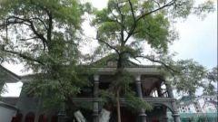 """甩掉""""拐杖"""",一座楼一棵树见证中国共产党走上光明道路"""