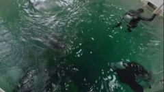海军工程大学:轻潜水带你探秘水下世界