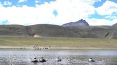 """""""是男人今天就游过去""""侦察兵在高原冰湖中挑战武装泅渡"""