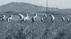 改良陶瓷炸弹用于战场 日军731部队为了开展细菌战不择手段
