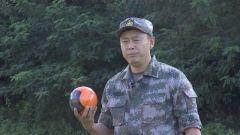 """退役军人刘东兴:在""""第二战场""""延续飞行梦想"""